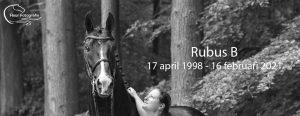 Rubus B 1998 - 2021
